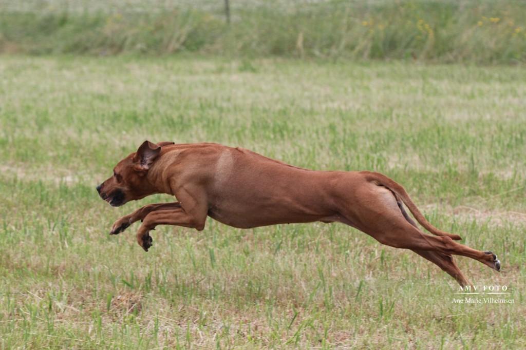 Mwishos sidste løb - 11 år og 4 måneder gammel