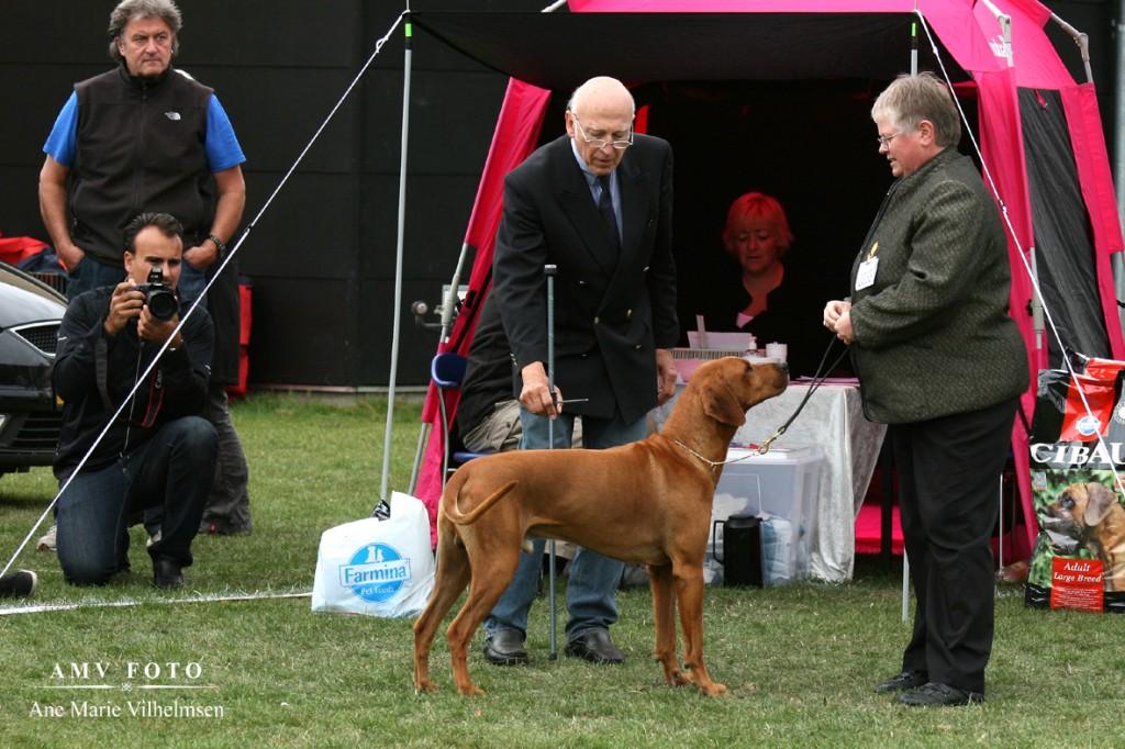 Hvorfor måle en hund der er indenfor standarden - 67,5 cm